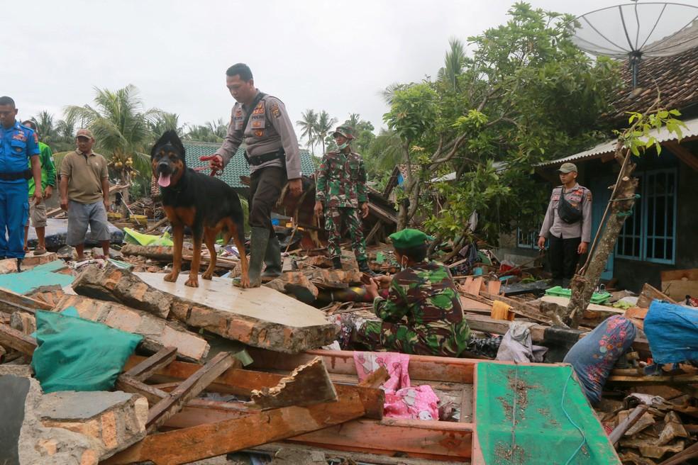 Indonésia cães farejadores em buscas — Foto: Reuters