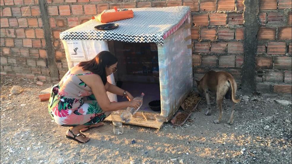 Moradora da Zona Leste constrói abrigos para cachorrinhos que vivem nas ruas de Teresina — Foto: Maria Romero/ G1 PI