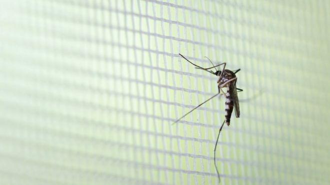 Os sinais que indicam nova alta da dengue no Brasil em 2020