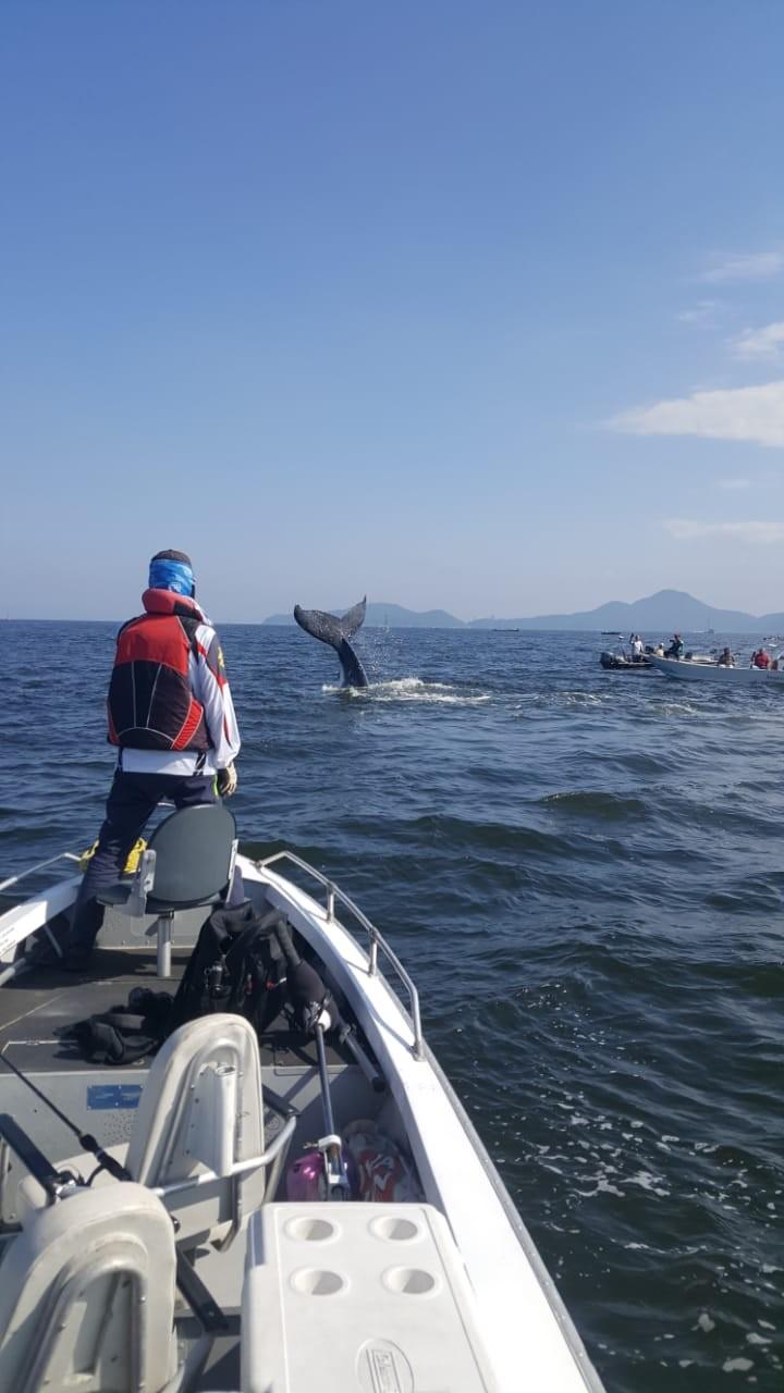 Baleia jubarte é flagrada próxima a costa de SP: 'Indescritível'; vídeo - Notícias - Plantão Diário