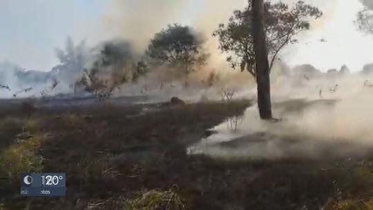 Bombeiros levam 6h para conter incêndio em área de mata da Unesp e da Feena em Rio Claro