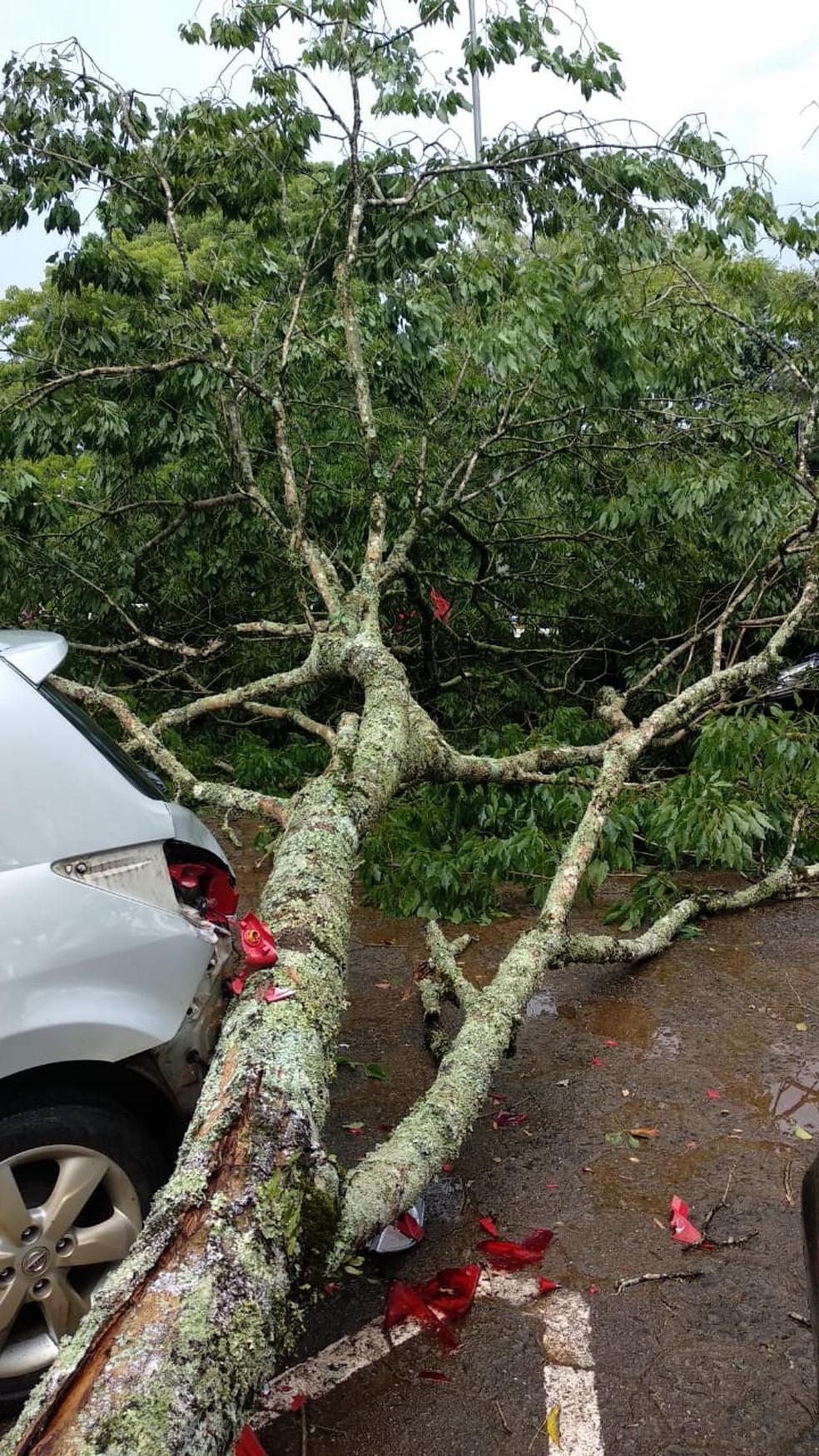 Queda de árvore causa danos em carro em Itá nesta quinta-feira (20) — Foto: Defesa Civil/Divulgação