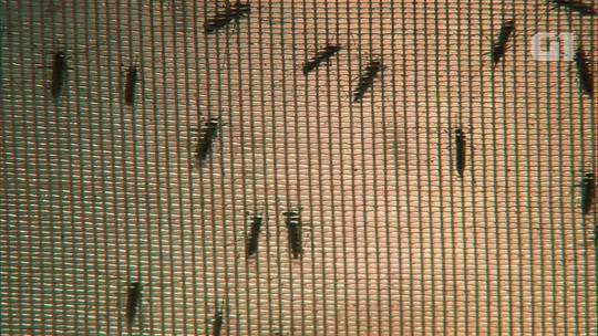 Vírus do atual surto de febre amarela tem mutação genética inédita, diz Fiocruz