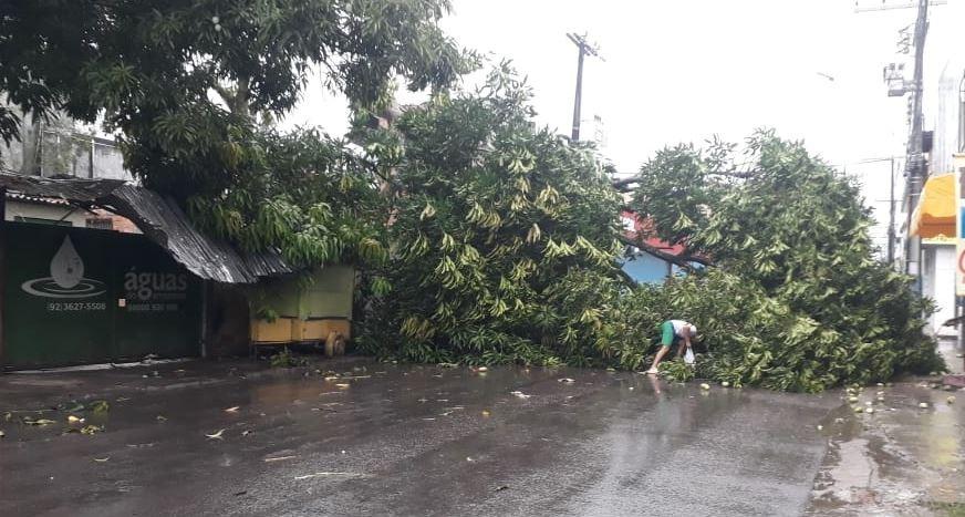 Árvores caem e afetam trânsito em ruas de Manaus  - Notícias - Plantão Diário