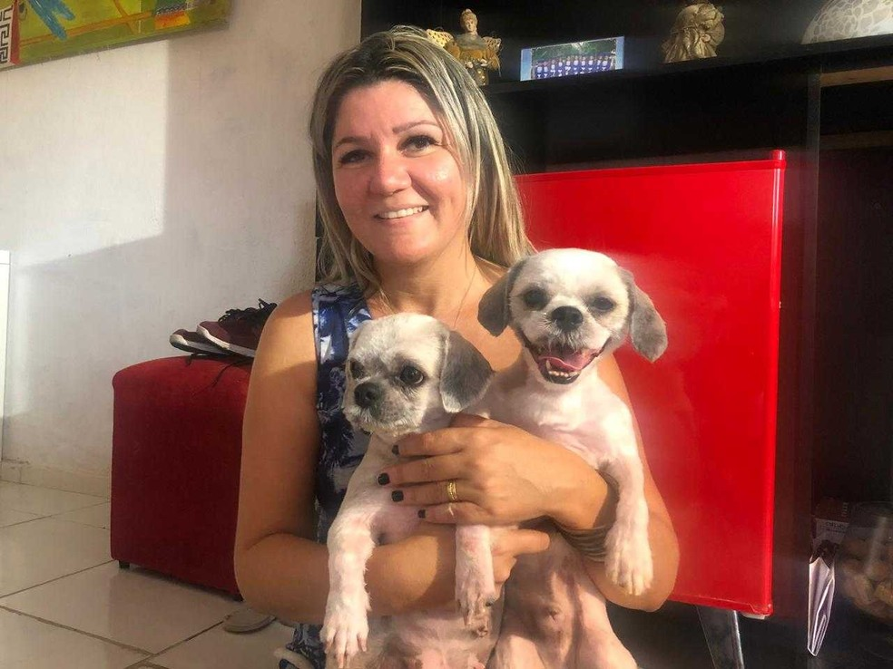 Cachorros da raça Shit-zu foram rebatizados de Maggie e Spock após resgate.  — Foto: Marina Alves/SVM