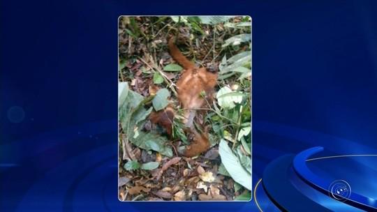 Vigilância confirma morte de macaco por febre amarela em Sarapuí