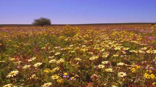 Globo Repórter embarca num safári de flores no sul da África