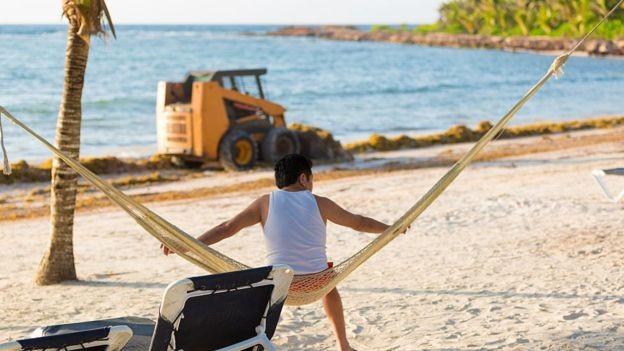 O sargaço preocupa em relação a possíveis danos ao meio ambiente e também tem afetado o turismo (Foto: Getty Images via BBC)