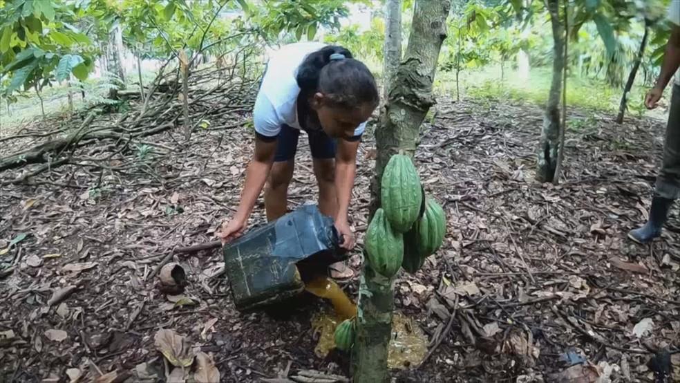 Tina usa o líquido que sobra da produção do biogás como fertilizante — Foto: Reprodução/Rede Amazônica