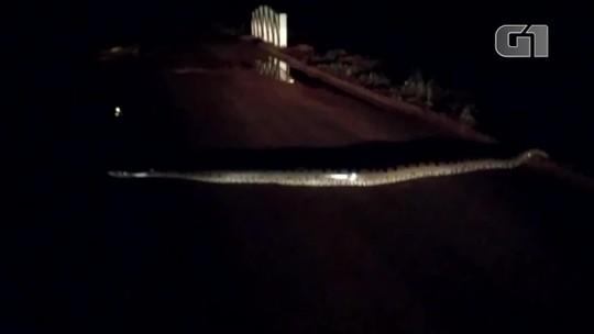 Pescadores filmam quando cobra de 5 metros de comprimento atravessa ponte em São Simão