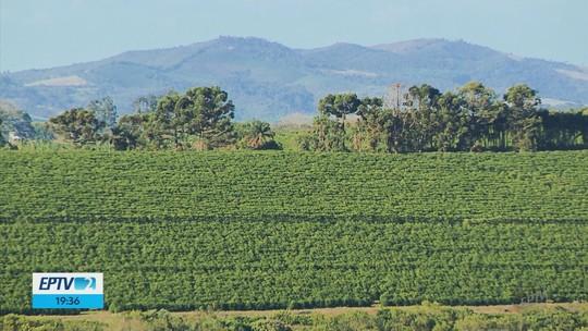 Censo aponta que Sul de MG foi região que mais aumentou produção de café