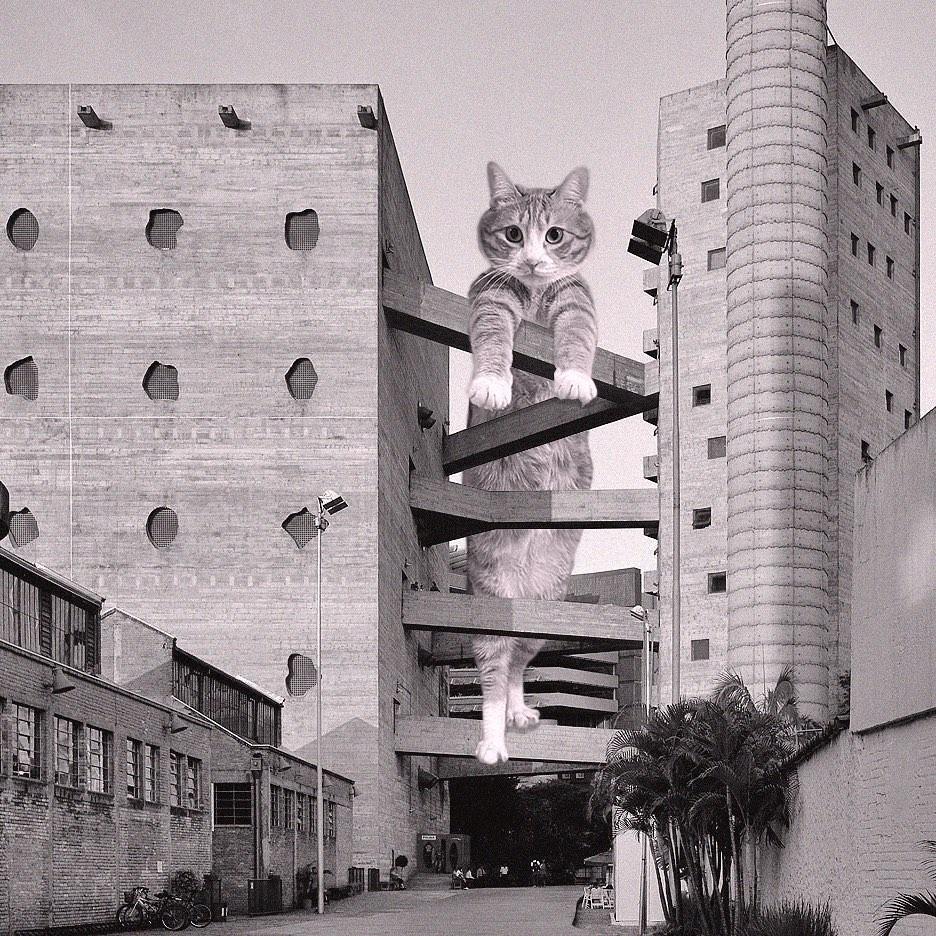 Você precisa conhecer este perfil do Instagram que mistura gatos e arquitetura brutalista