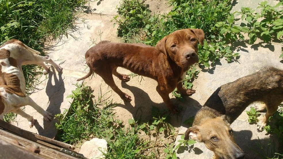 Cachorros são resgatados em situação de maus-tratos em Cabo Frio, no RJ — Foto: Arquivo pessoal