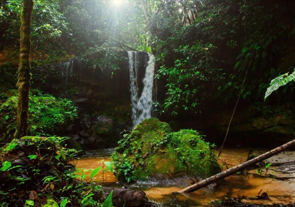 Resultado de imagem para Parque Nacional da Serra do Divisor