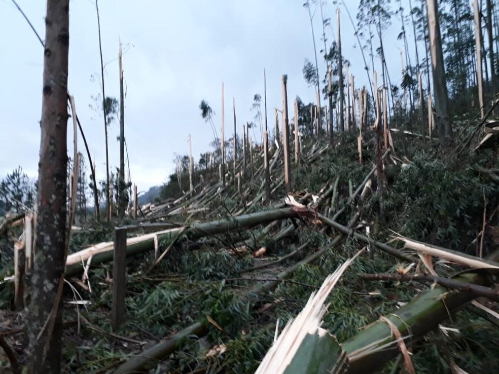 Em Presidente Getúlio, estrada geral da localidade de Serra Vencida teve quedas de árvores (Foto: Gildo Oliveira/divulgação)