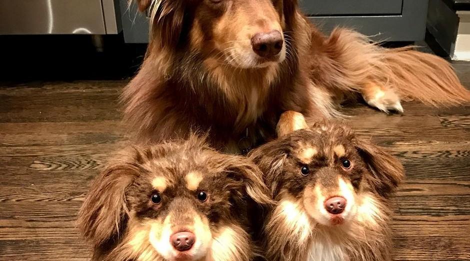 Original e rpelicas: Cuddle Clones cria pantufas idênticas aos pets (Foto: Instagram/mingey)