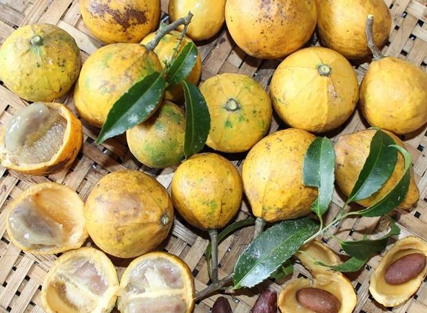 Fruta Saputá-de-cipó (Foto: Hélton Josué Teodoro Muniz/Divulgação)