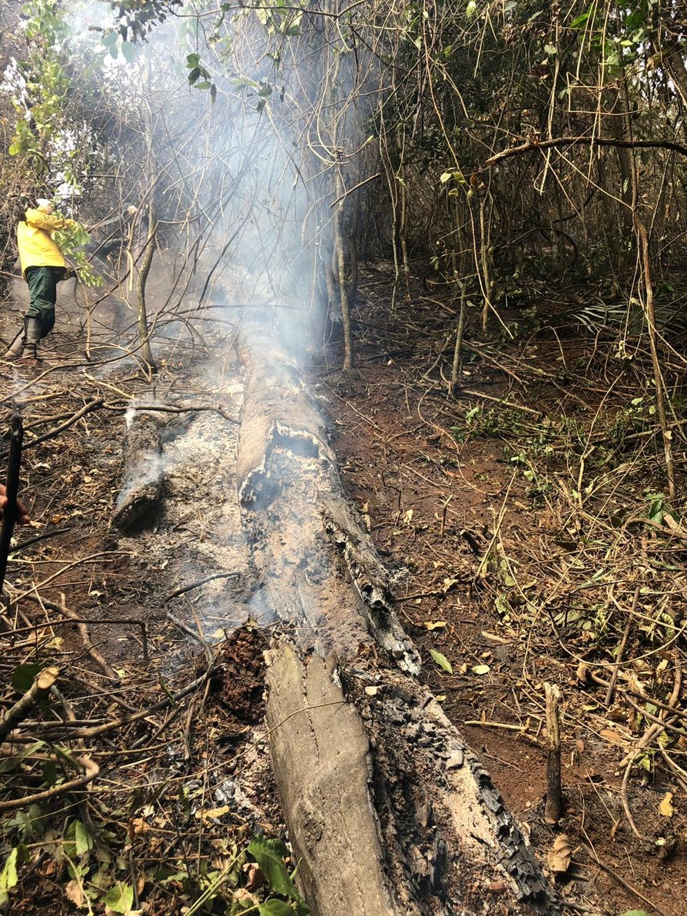 Troncos de árvores foram consumidos pelas chamas — Foto: Corpo de Bombeiros Militar/Divulgação