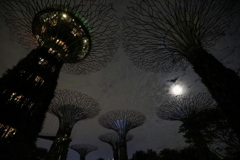 Monumentos em forma de árvore, Supertrees de Singapura ficam com luzes apagadas para a Hora do Planeta 2021 neste sábado (27) — Foto: Dawn Chua/Reuters