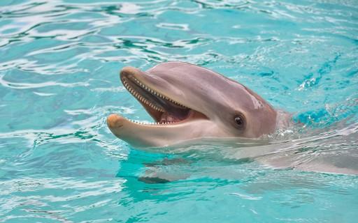 """SeaWorld encerra """"surfe de golfinhos"""" após pressão de ONG"""
