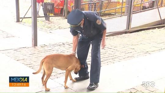 Cachorrinha abandonada ajuda nas rondas de guardas municipais de Curitiba