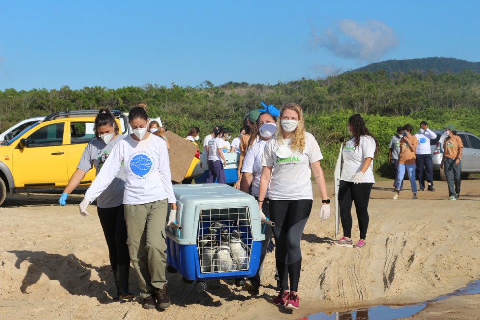 Ao todo 10 animais foram resgatados em Laguna, no Sul catarinense — Foto: R3 Animal/Divulgação