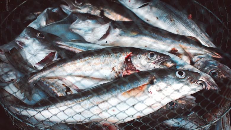 peixe-pescado-barco-piscicultura (Foto: Vincent Desjardins/CCommons)
