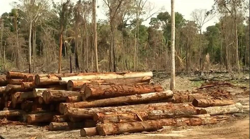 Duas cidades do AC entram para lista dos municípios que mais desmataram a Amazônia — Foto: Reprodução