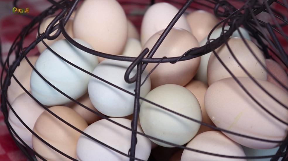 A característica tem relação com a proteção natural das aves. — Foto:  Foto: TV Clube