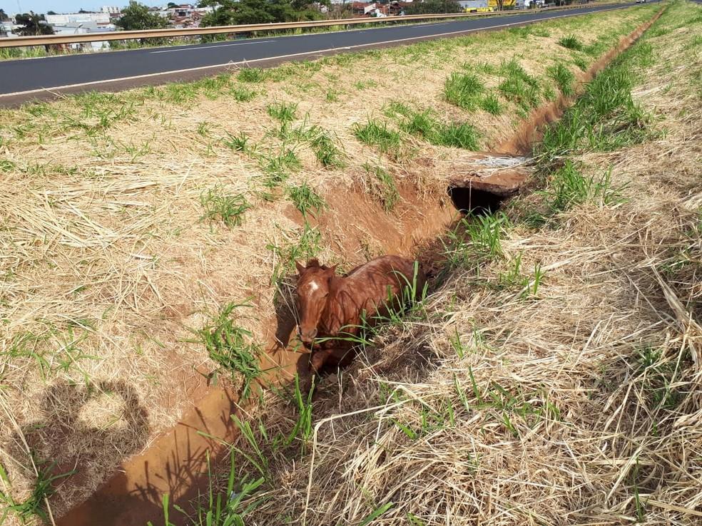 Cavalo foi atropelado em rodovia de Jales  — Foto: Divulgação/A Voz das Cidades