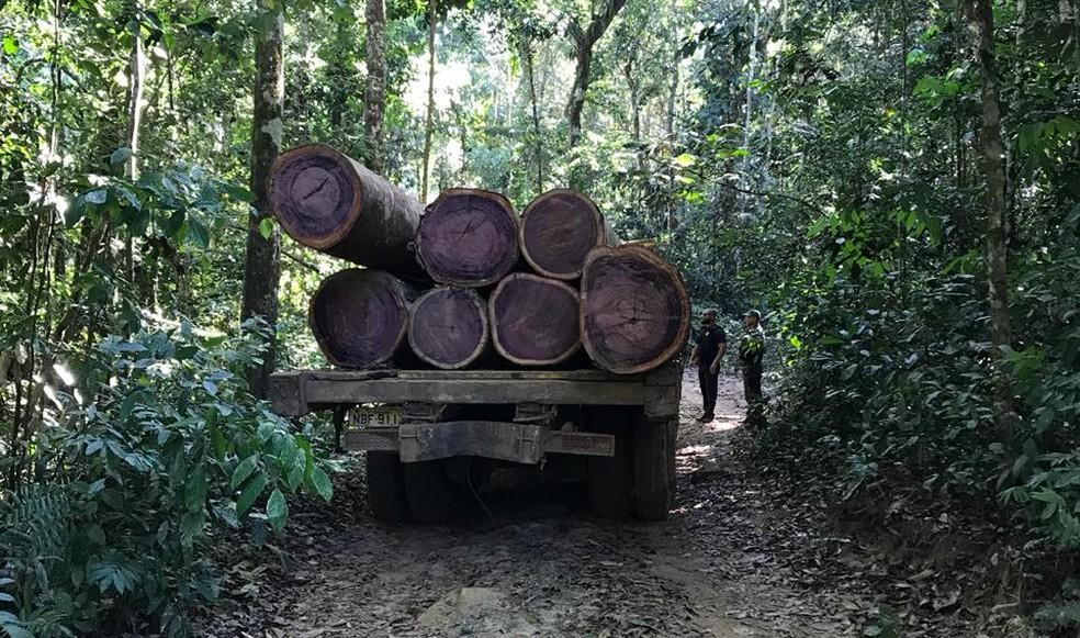 Fiscalização ocorreu nesta semana.  — Foto: Polícia Federal/Divulgação