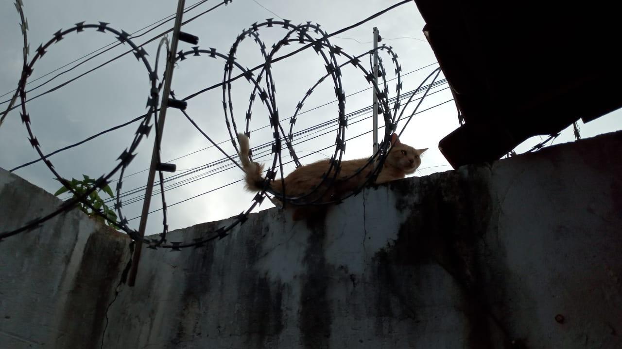 Bombeiros resgatam gato que ficou preso em concertina, em Montes Claros