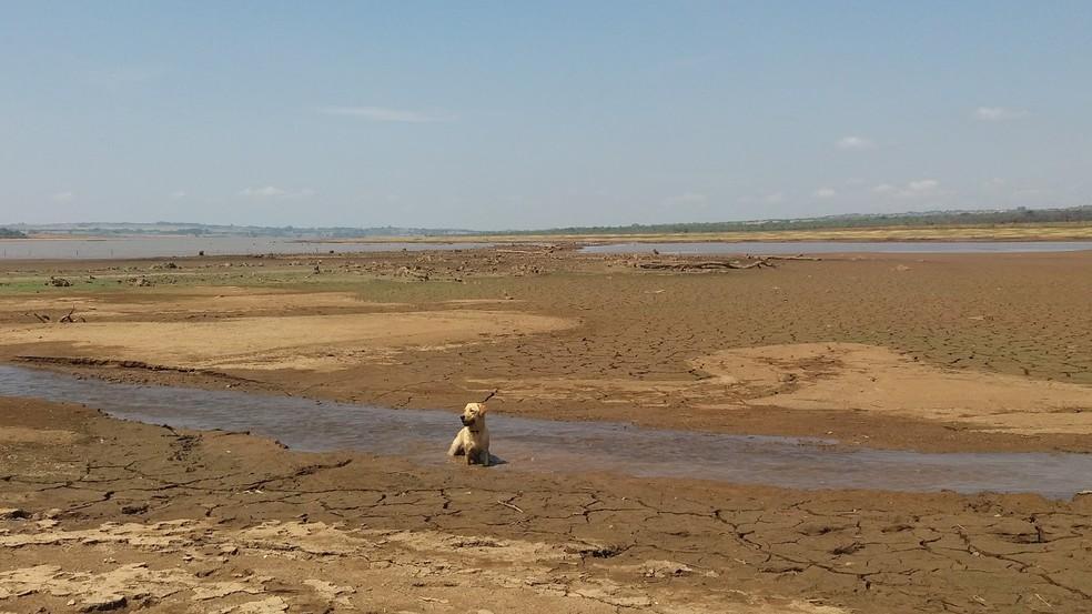 Margem do lago do Descoberto, no DF (Foto: Gilver Ferreira/Arquivo pessoal)