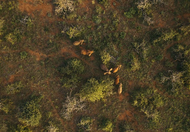 A tecnologia SAP usa diversos drones para vigiar manadas  (Foto: Thinkstock)