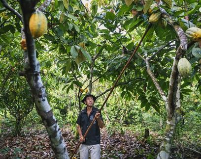 Maioria dos agricultores prefere reserva legal dentro da propriedade