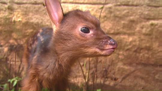 Novos moradores ampliam variedade do Zoológico Municipal de Cascavel