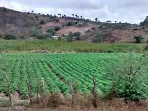 Água era furtada para irrigar plantações de batata  (Foto: Divulgação/Compesa)