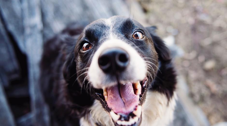 animal, cachorro (Foto: Reprodução/Pexels)