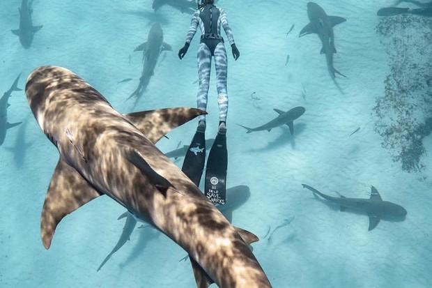 Ocean tem um programa no Havaí em que leva não-cientistas para observar tubarões (Foto: reprodução instagram (@oceanramsey)
