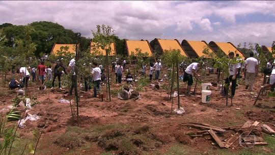 Verdejando faz mutirão de plantio de árvores na Zona Leste neste sábado
