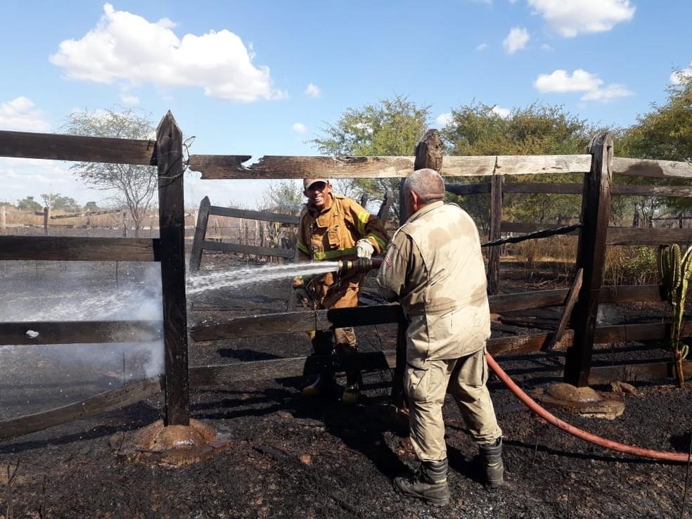 Bombeiros debelam chamas em área de pasto. — Foto: Divulgação/Corpo de Bombeiros/CE