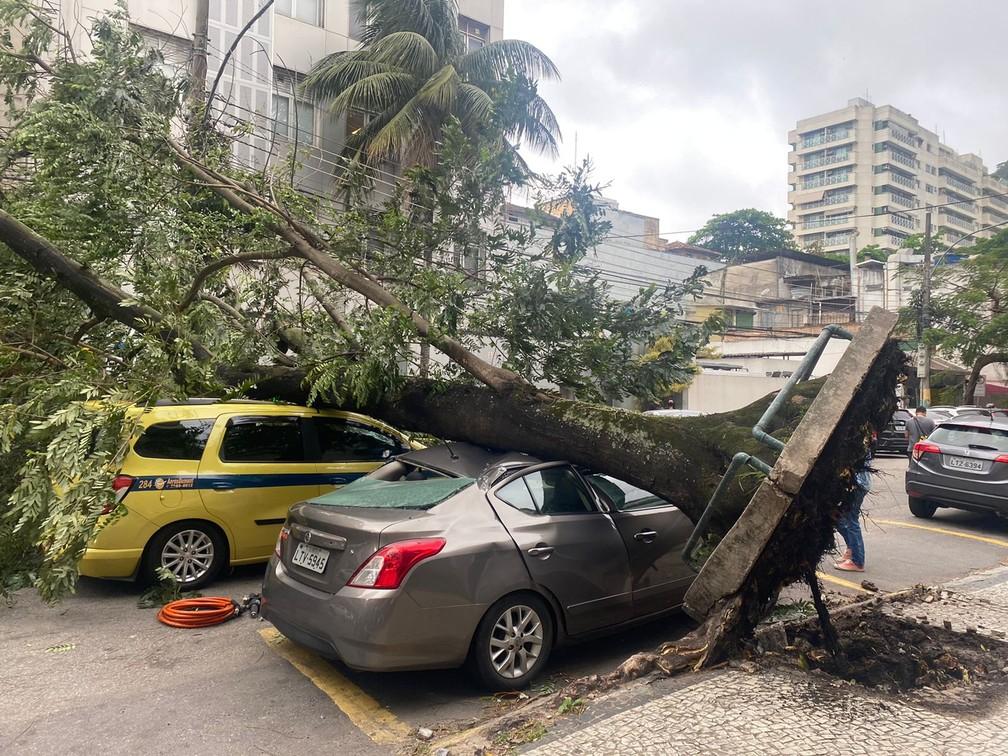 Árvore atingiu carro na Rua Capitão Salomao — Foto: Amanda Kestelman/ge