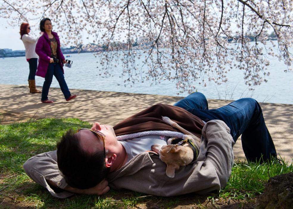 Homem tira soneca com seu cão embaixo de uma cerejeira em Washington DC (EUA) — Foto: Karen Bleier/AFP/Arquivo
