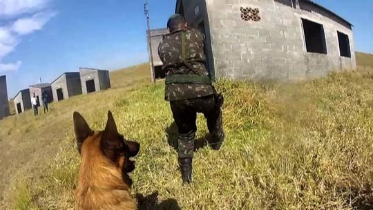 'Plugue' acompanhou um dia de treinamento com cães na Aman
