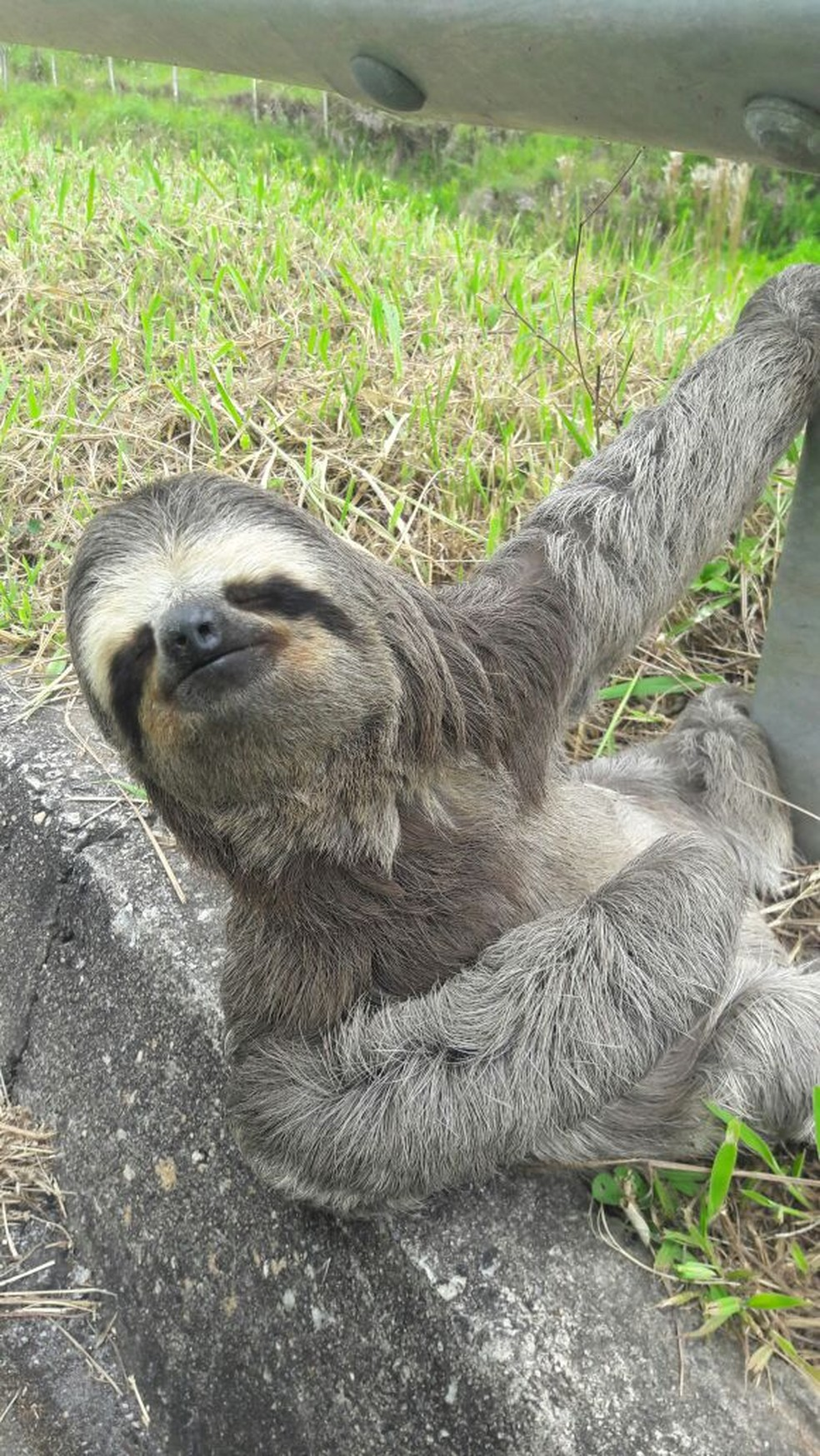 Animal foi encontrado ao tentar atravessar a pista da rodovia (Foto: Divulgação/ Rota das Bandeiras)