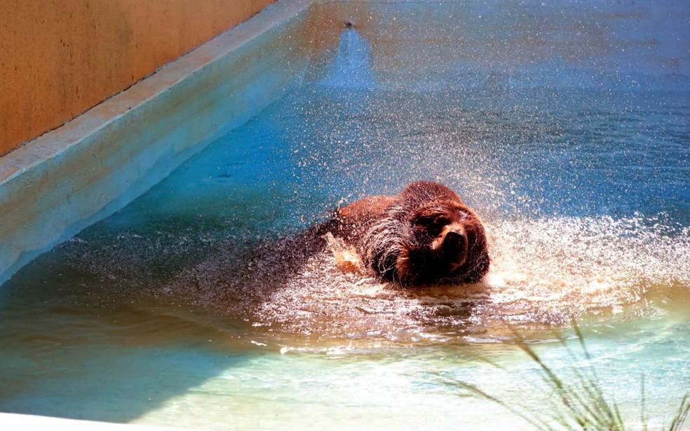 Robinho se refresca do calor de 37ºC em piscina com cascata e até ar condicionado, em Goiânia — Foto: Reprodução/Paulo José