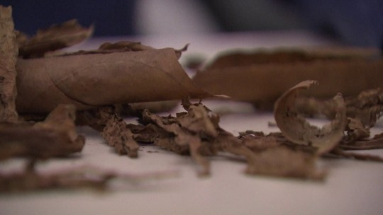 Charutos cubanos falsificados eram vendidos em endereços nobres do Rio