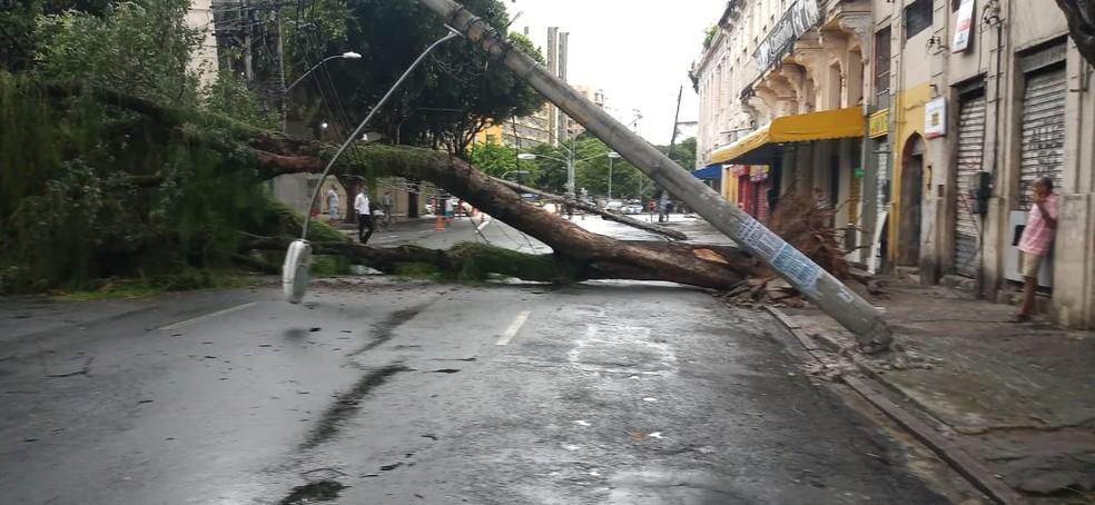 Árvore caiu sobre fios na Rua Forte de São Pedro, em Salvador — Foto: Cid Vaz/TV Bahia