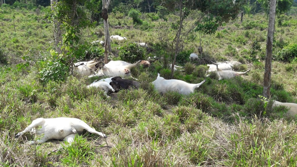 Animais morrem com queda de raio em MT — Foto: Cleverson Veronese/Arquivo pessoal