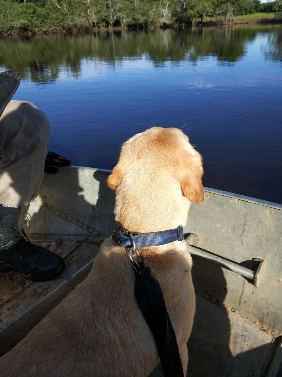 Cadela farejadora, chamada Mel, foi usada nas buscas por desaparecido em rio município de Itiquira (Foto: Corpo de Bombeiros de MT)